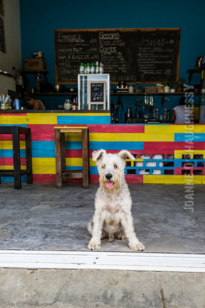 Dog at Scoops & Spokes